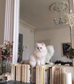 kittens, books and lifestyle