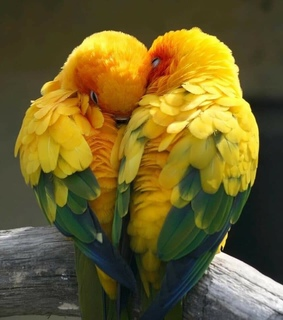 couple, cute and parrots