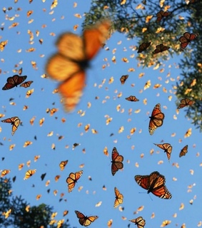 beautiful love glam, animal animals and butterfly butterflies