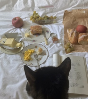 animal, aesthetic and cat