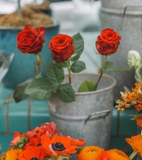 rose, lifestyle and flowers
