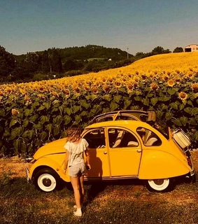 volkswagen, yellow and theme