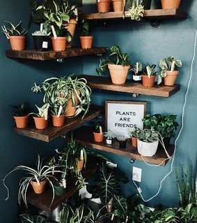 plants, green thumb and evergreen
