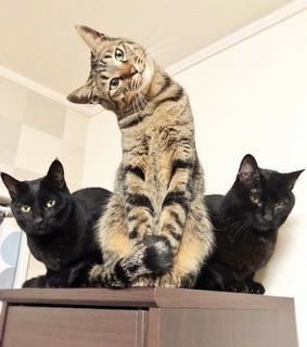 funny, cute and kitty