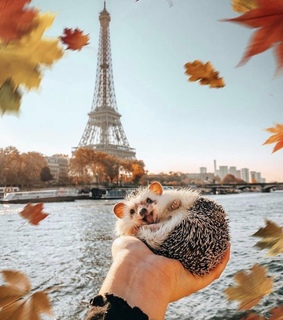 eiffel tower, fall and love