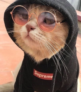 cats, cat and cool