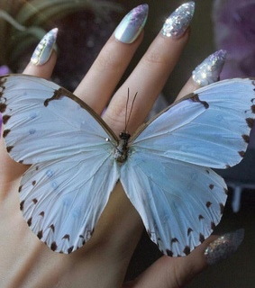 pretty, beautiful and butterfly