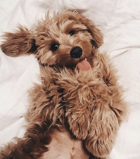 animal, goals and cute