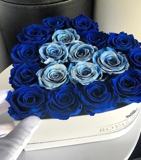 roses, flowers and blue