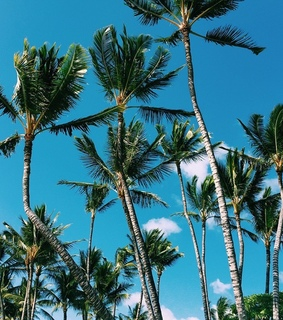 palm trees, nature and holidays
