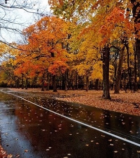 colours, trees and road