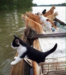 water, cats and beautiful