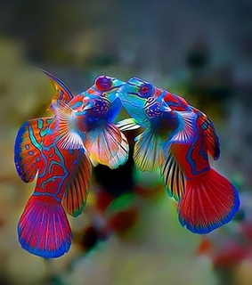 Animales, peces and colores