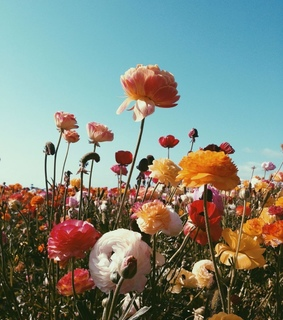 flower, filter and flower field