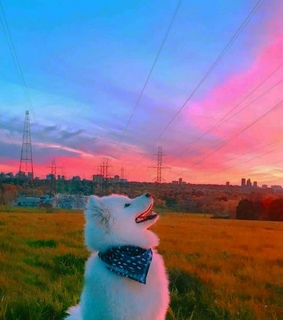dog, cities and colorful