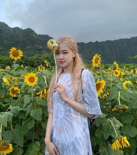 yellow, field and blackpink