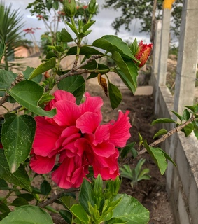 photography, flowers and bloom