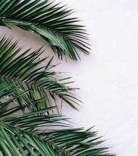 lovely, palm tree and aesthetic