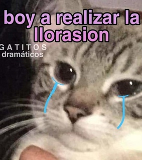 llorasion, meme and aesthetic