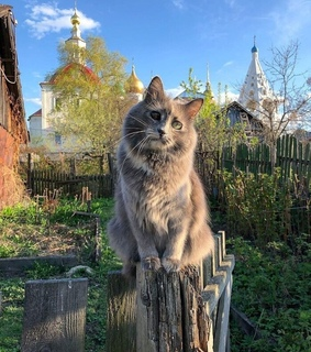 country, cat and nature