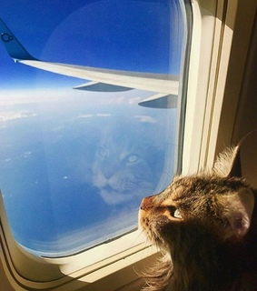 Flying and cat