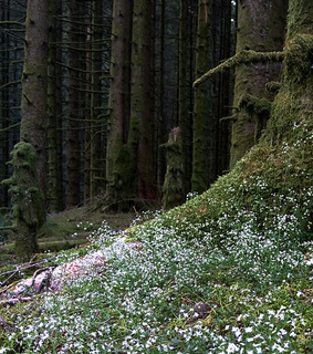 forest, moss and theendlessforest