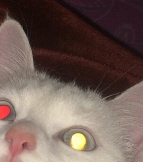 evil, edgy and white cat