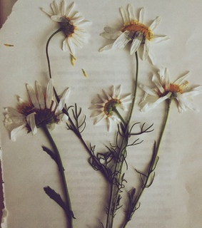 summer, indie and daisies