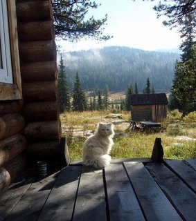 country, relaxing and cat