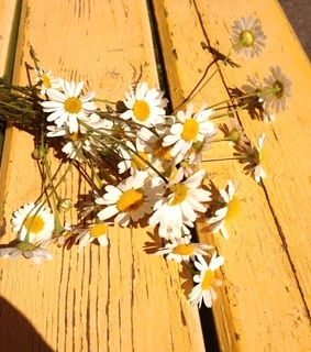 bench, daisies and flowers