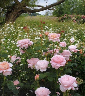 garden, ethereal and pink