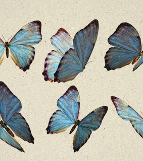 Taylor Swift, butterfly and header
