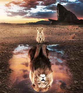lionking, lion and africa