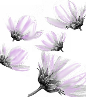flowers, design and illustrate