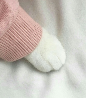 cat, cute and aesthetic