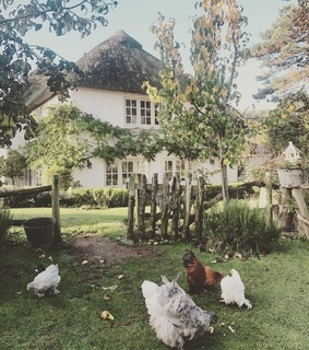 home, chickens and farm house