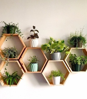 succulent, inspiration and aesthetic