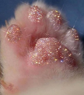 rose gold, puppy and paw