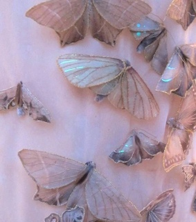 pink, butterfly and art