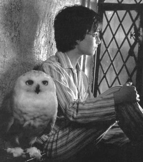 black and white, hedwig and owl