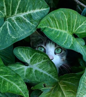 cat, beautiful eyes and green