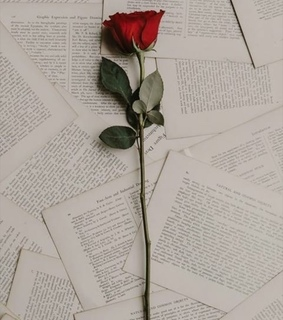 tumblr, rose and letters