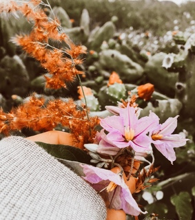flowers, inspiration and beautiful