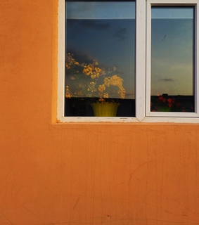 sunset, wall and flowers