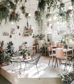plants, cafe and green