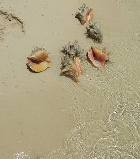 seashells, season and ocean