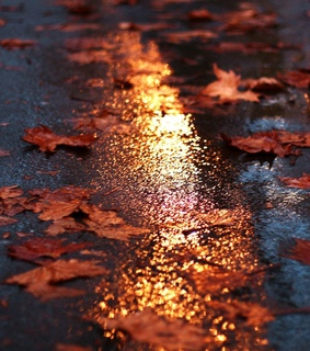 autumn, rain and aesthetic