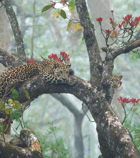 forest, wild and leopard