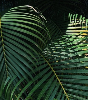 leaves, wallpaper and palms