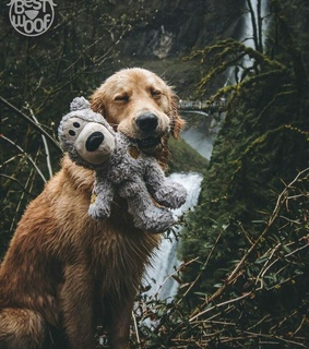 puppies, puppy and animals
